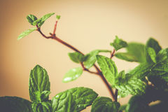 Warm photo of spring gentle leaves Royalty Free Stock Images