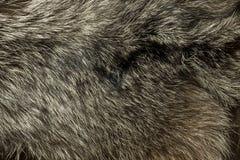 Warm Polar Fox Fur. Useful As Background Stock Photos