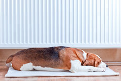 Warm radiator Royalty Free Stock Images