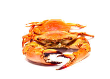 Warm red crabs on white background. Boiled crabs bunch isolated. Royalty Free Stock Photo