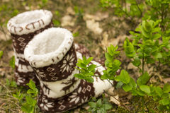 Warm socks in the forest Royalty Free Stock Photos