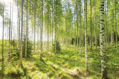 Warm spring morning in the forest with bright sunlight Stock Photos