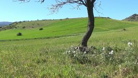Warm Spring in Sardinia stock video footage