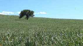 Warm Spring in Sardinia stock footage