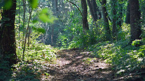 Warm summer day. Forest trail. Stock Images