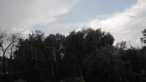 Warm summer rain in a city. Wet branches of tree and sky stock video footage