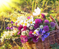 Warm Summer Rays on Wildflowers Bouquet Stock Image