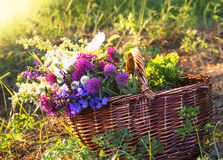 Warm Summer Rays on Wildflowers Bouquet Royalty Free Stock Photo