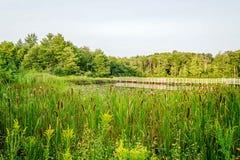 Warm Summers Day in Northeast Ohio. The Duck Pond in the Metro parks on a warm summers day in Northeast Ohio Stock Photo