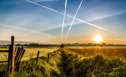 Sunrise with blue sky and golden grass royalty free stock photo