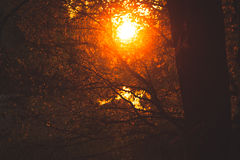 Warm sunlight in bush and branches Stock Photo