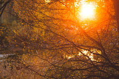 Warm sunlight in bush and branches Stock Image