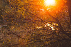 Warm sunlight in bush and branches Stock Images
