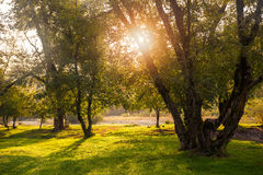 Warm sunlight through tree crowns Stock Image