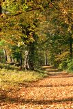 Warm  sunny autumn day in nature. Warm autumn day in nature, many yellow leaves Royalty Free Stock Images