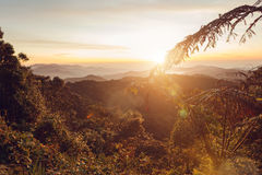 Warm Sunrise. Dreamy landscape with warm colors, vegetation, mountains and a low standing sun Royalty Free Stock Photos
