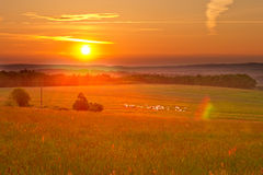 Warm sunrise over a meadow with cows Stock Photography