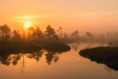 Warm sunrise at a swamp covered in fog. Sunshine beats through the thick mist with tree silhouettes and a path at Kemeri National royalty free stock photos