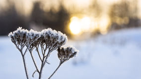 Warm sunset in cold winter Royalty Free Stock Photos