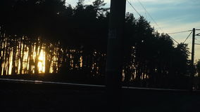 Warm sunset in the forest stock footage