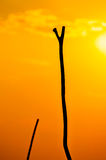 Warm sunset with silhouette of Polers Sticks infront. Royalty Free Stock Photo