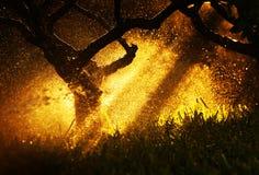 Warm sunset sunlight at autumn forest. Light through trees, rain at woods Royalty Free Stock Photos