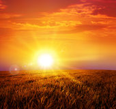 Warm sunset on the wild meadow Royalty Free Stock Photos