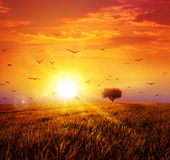 Warm sunset on the wild meadow Royalty Free Stock Photo