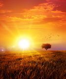Warm sunset on the wild meadow. Intense sun setting down on a peaceful grass field with a flight of birds Stock Images