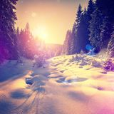 Warm sunset at winter forest. snow covered pine tree glowing in sunlight. Picturesque unusual scene. beauty in the world. instagram effect. soft light effect Royalty Free Stock Images