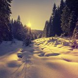 Warm sunset at winter forest. snow covered pine tree glowing in sunlightn. Warm sunset at winter forest. snow covered pine tree glowing in sunlight. picturesque Stock Images