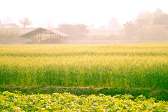 Warm sunshine in Romantic filed In Pai Stock Photos