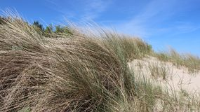 Baltic Seaside With Clump Of Grass. Warm sunshine viewpoint boundary line  between poland And Germany on baltic seaside Usedom Island Royalty Free Stock Images