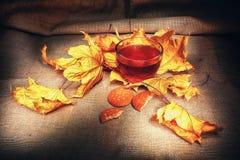 Warm tea autumn vintage. Cup of hot tea in the autumn season royalty free stock photography