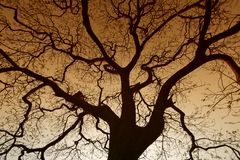 Warm Tree Silhouette Stock Photo