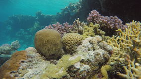 Warm tropical sea. Submarine life. Coral reef. Exotic fishes. The beauty of the underwater world. Life in the ocean. Diving on a tropical reef. Submarine life stock video footage