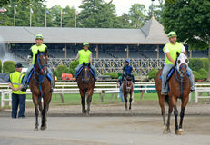 Warm up at Saratoga Horse Track Royalty Free Stock Images