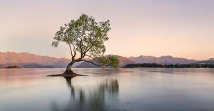 Warm Wanaka sunrise Stock Photography