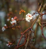 Warm winter blossoms closeup Stock Image