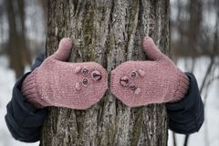 Warm winter knitted mittens. Warm winter mittens knitted with brown bear face. The mittens dressed on the hands hugging the tree in the winter forest Royalty Free Stock Photos