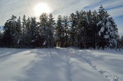 Warm winter sunshine over snowy white field and forest landscape. In the arctic circle Royalty Free Stock Photography