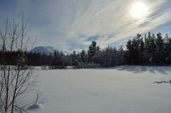 Warm winter sunshine over snowy white field and forest Royalty Free Stock Photography