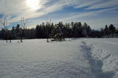 Warm winter sunshine over snowy white field and forest Stock Photography