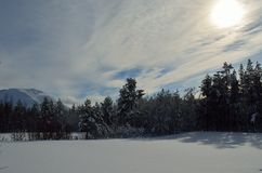 Warm winter sunshine over snowy white field and forest. Landscape Royalty Free Stock Photo