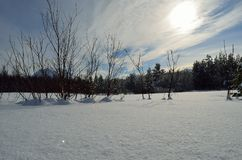 Warm winter sunshine over snowy white field and forest Royalty Free Stock Images