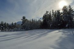 Warm winter sunshine over snowy white field and forest Royalty Free Stock Image