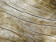 Warm wooden texture close up photo. Sepia beige wood background. White old tree near the sea. Curves and lines on rustic timber. Rough timber texture. Sea wood Royalty Free Stock Image