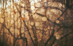 Warm yellow golden color tone blurred nature background Stock Images