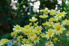 Warm yellow Stock Photo
