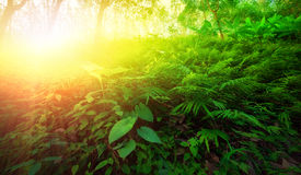 Warm yellow sunlight shines through leaves and tree branches. Inside in tropical forest. Beautiful green nature background Royalty Free Stock Image